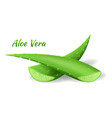 aloe vera cut leafs realistic green plant two vector image