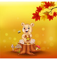 cartoon babear holding honey pot on tree stump vector image vector image
