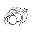 peach fruit line drawing vector image