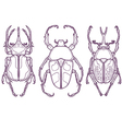 Set of 3 Beetle Bugs Insect Outline Hand Drawn vector image vector image