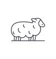 sheep line icon concept sheep linear vector image vector image