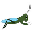 big grasshopper or color vector image vector image