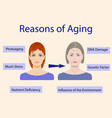 causes of aging with two vector image