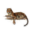 leopard is lying on a tree from a splash of vector image vector image