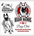 malinois belgian belgian shepherd dog vector image vector image