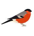 bullfinch bird isolated object vector image vector image