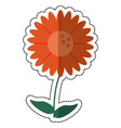 cartoon gerbera flower natural vector image vector image