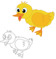 duckling chicks on white vector image
