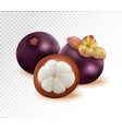 mangosteen isolated on transparent background two vector image vector image