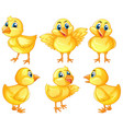 six cute chicks on white background vector image vector image