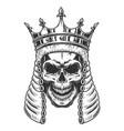 skull in judge wig vector image vector image