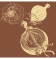 fresh brown onions engrave drawing vector image vector image