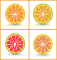 Orange fruits vector image vector image