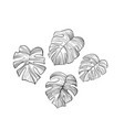philodendron leaves hand drawn set vector image