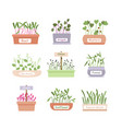 cartoon fresh organic sprouted plants bagreens vector image vector image