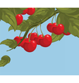 Delicious cherry on a branch vector image vector image