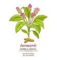 turmeric plant vector image