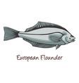 european flounder color vector image vector image