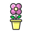 indoor flower with purple blossom in clay pot vector image