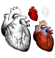 realistic heart vector image vector image