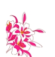 beautiful bouquet pink lilies vector image