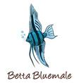 betta color vector image vector image