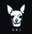 chihuahua head isolated on black background vector image vector image