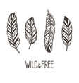 feathers set vector image