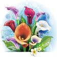 bouquet calla lilies vector image