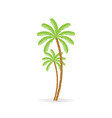 coconut tree palm with bunch of coconut fruit vector image vector image