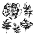 Hand drawn rose-hip flowers and leaves vector image vector image