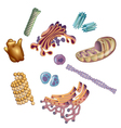 Organelles found in cells vector image vector image