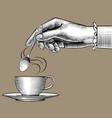 womans hand with a coffee cup and spoon vector image vector image