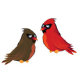 Cartoon Couple of Cardinals vector image vector image