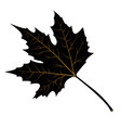 maple leaves black silhouette vector image