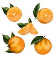 orange fruit isolated set vector image vector image