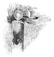 trapdoor spider vintage vector image vector image