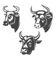 bull heads emblems isolated on white background vector image