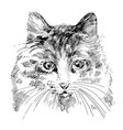 cat sketch vector image vector image