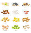 plant seeds cereals grains chickpeas nuts and vector image