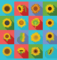 sunflower blossom icons set flat style vector image