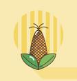 corn food cartoon vector image