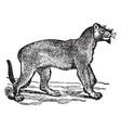 puma vintage vector image vector image