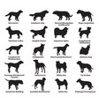 set of dogs silhouettes vector image vector image