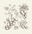 decorative fresh berry sketch template vector image vector image