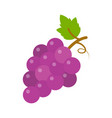 grapes icon fruit nature wine vector image