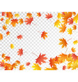 maple leaves autumn foliage vector image