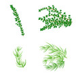set of thyme and tarragonin realistic style vector image vector image