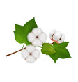 cotton flower branch realistic composition vector image vector image