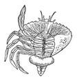 crustacean parasite vintage vector image vector image